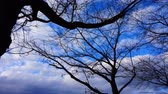 moving image : time-lapse of blue sky and cloud Stock Footage