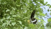 motýlek : Butterfly flying slow motion