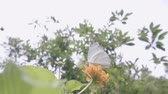 бабочки : Butterfly flying slow motion