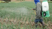 яд : farmer spraying pesticide at onion field in thailand