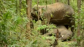 elefante : asia elephant in tropical forest