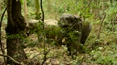 elephas maximus : asia elephant in tropical forest