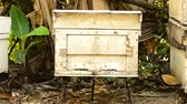 petek : honey bees entering hive