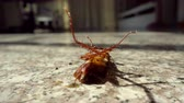 dead animal : Dead cockroach on floor, pest control concept