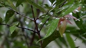 gota de chuva : nature fresh green leaf under heavy rain