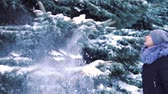 falling snow : slow motion, snow falls from trees in a snow-covered winter park