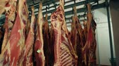 butchered : In the large freezer compartment hulks of cattle are hanging. Frozen meat of a cow and pig. Storage of meat products. Finished bloody animal carcasses. Meat in the fridge. Stock Footage