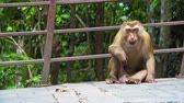 opice : monkey sits in the park and looks around. wild animals