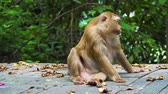 ormanda yaşayan : monkey sits on the road in the park and looks around