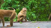 spirituality : monkeys in the tropical forest