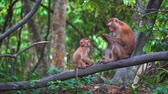 dik dik bakmak : monkeys in a rainforest are sitting on a branch