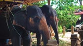 mít : elephant farm in Asia, a tour of tourists on elephants through the jungle. travels