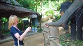 słonie : Female tourist feeds and pet the elephants on start at safari track