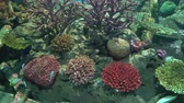 yüzme : Exotic fishes in the aquarium with colorful coral reef