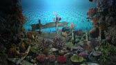 scuba dive : Tropical fish living near colorful corals and boat debris Stock Footage