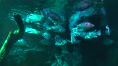 плавники : Sea fish swim in the background of a coral reef. aquarium with marine life.