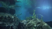 skuba : Large rocks at a underwater depth, and sharks swim near