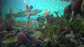 squali : underwater world in the aquarium. marine life in salt water. fish swim between corals.