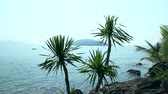 wazon : Stone island with palm trees in ocean. Boat on horizon of sea.