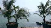 wazon : Palm trees in front and sea horizon with islands at background.