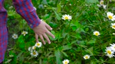 human back : Girl walking and touching green grass and chamomiles, partial view. Girls hand touch chamomile flowers during walk. Closeup back view
