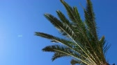 frondoso : Palm tree branches swaying on wind against bright sky