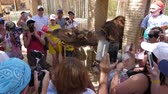 směšný : Hammamet, Tunisia - 09 June 2018: arab man giving drink Coca Cola to camel in zoo for fun of tourist people. Tourist people making photo as camel drinking cola from bottle. Dostupné videozáznamy