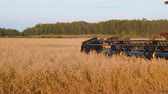 farming equipment : View of modern combine harvester in action on countryside