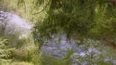 torrente : River water flowing in summer forest, green plants and trees on background