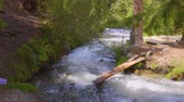 скрестив : Dangerous bridge of wooden planks over stormy river in green forest