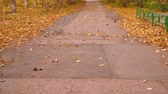 golpe : Wind blowing autumn leaves on empty asphalt road in park Stock Footage