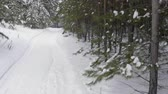 к северу : Winter forest path. Snowy way into deep winter woods with pine trees covered with snow. Slow Motion