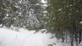 harikalar diyarı : Track out dolly shot of fir pine tree forest at winter while snowfall. Empty nobody video of winter path. White snow fall snow flakes