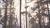 bare forest : Snowy pine trees at frosty woodland. Tilt down shot snowy pine trees tops in the winter forest. Stock Footage