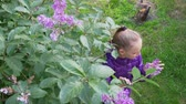 lilás : Pretty Girl Sniff Lilac Flowers Spring Garden. Happy Caucasian Child Smell Blossom Plant Leisure Activity. Kid Enjoy Bright Bloom Bush Floweret Nature Good Emotions Hobby Concept 4K