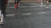 Horse legs walking over wet asphalt road after rain in summer city. Pedestrian feet crossing crosswalk road after rain in summer city