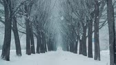 mrożonki : Winter blizzard in snowy tree alley background in cold city. Winter landscape snowfall while snowstorm in tree alley covered snow in winter city park