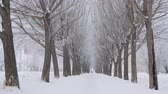 sněhové vločky : Beautiful snow-covered trees on winter alley. Amazing natural view of bare trees and snowy alley during snowfall at wintertime