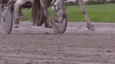 horse gait : many race horses hooves running across the race track, slow motion