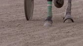 галоп : closeup of a racehorse hooves running across the race track, slow motion Стоковые видеозаписи