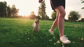 návrat : Jack Russell Terrier dog next to a girl happily running through the grass in the nature Park, slow motion