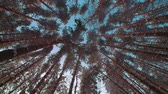 рождество : majestic snowy forest in a Sunny winter day, the snow fall on the camera,slow motion, low angle, wide shot