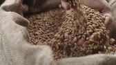 característica : human hand touching selected grain Golden wheat in jute sack, quality new crop, slow motion