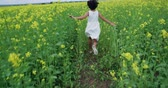 požehnání : little Asian girl 8-9 years old running through the field of yellow flowers, slow motion, back view , Steadicam shot