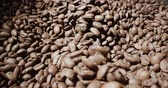 developing : 4k, slow motion,the freshly roasted coffee beans from a large coffee roaster Stock Footage