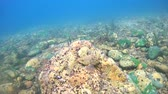 atrás : Littoral zone, rock covered with algae, Siberia, the Russian Federation, Eurasia Stock Footage