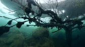 frieza : Flooded tree under ice in frozen lake, icedivind Stock Footage