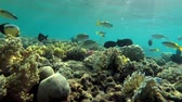 finely : Beautiful tropical fish swim over the shallow coral reef under the surface of water, Red sea, Marsa Alam, Abu Dabab, Egypt