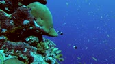 maldivas : Life in the coral reef Stock Footage