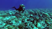 diving equipment : Young beautiful woman scuba diver swims with sea turtle over the coral reef - Indian Ocean, Fuvahmulah island, Maldives
